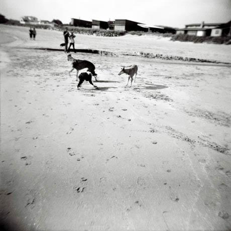 Er usikker på om det er båndtvang på Solastranden, men de fleste hundene løp rundt på egenhånd.